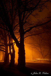 Trees along street at night