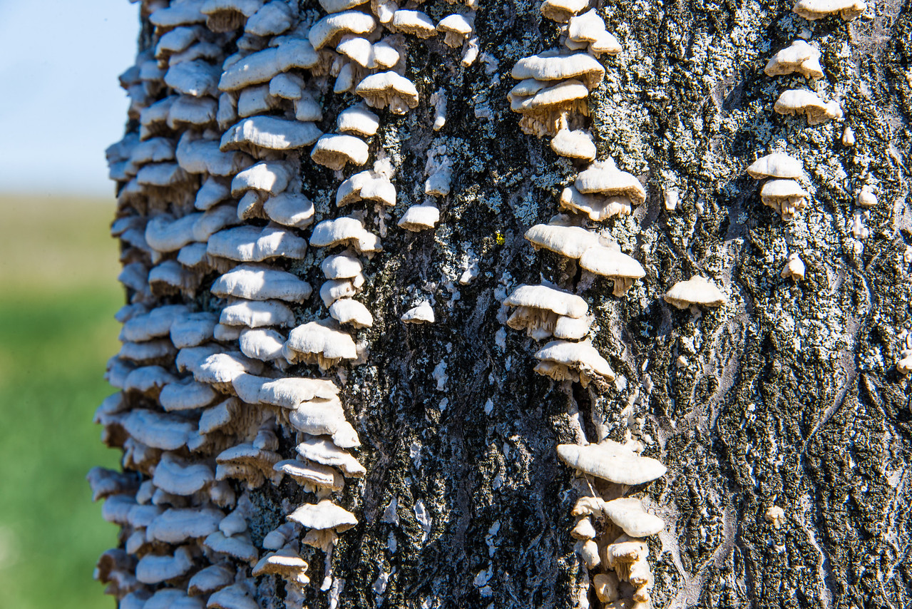 Fungus on tree in Northern Range of Trexler Nature Preserve - April 2013