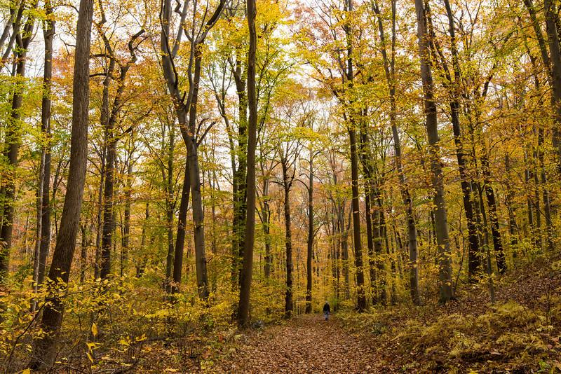 Hiking outside of Tyler Arboretum - 03 November 2013