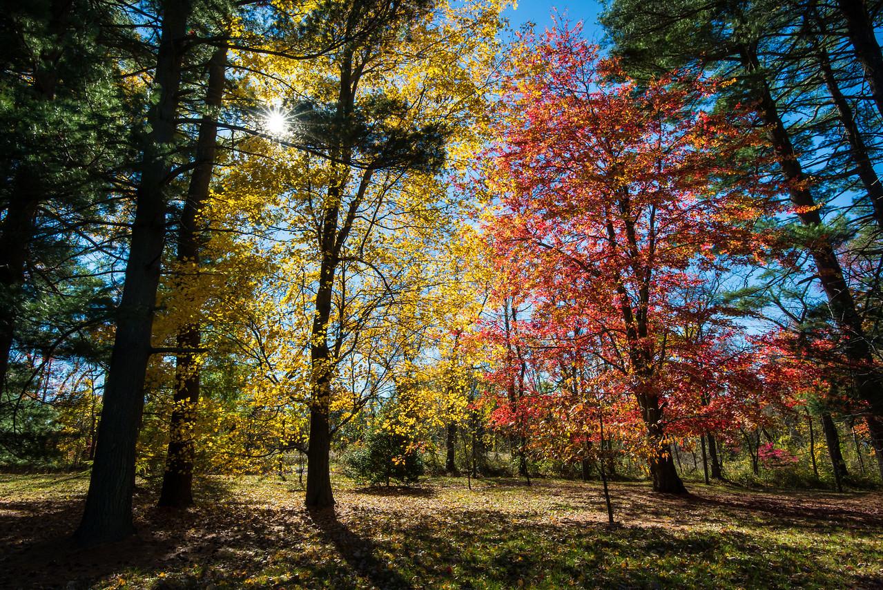 Tyler Arboretum - 03 November 2013