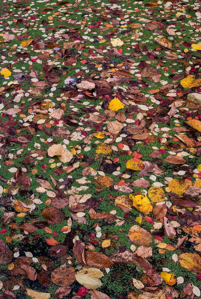 Pond at Tyler Arboretum - 03 November 2013