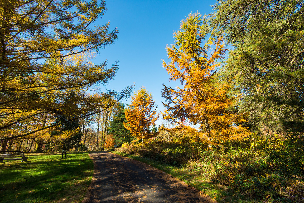 Walking path at Tyler Arboretum - 03 November 2013