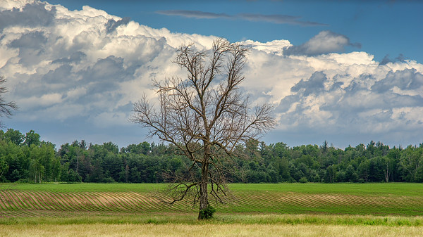A lone tree stood out from the forest.