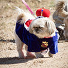 Participant from Saturday's Penrose Park Pet Parade during Apple Day. Lisa Rix/Daily Record