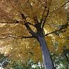 Mom's tree 1