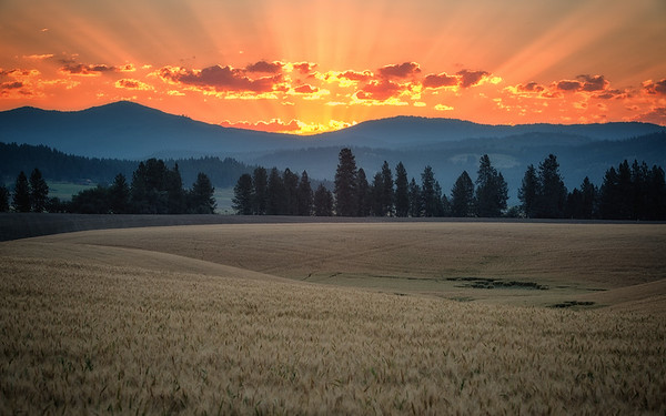 Peone Prairie Summer Sunrise