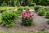 View, Peony Garden Bed 22, featuring Montezuma (2ef)