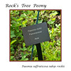 Plant label for Rock's Tree Peony