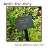 Plant label for Rock's Tree Peony