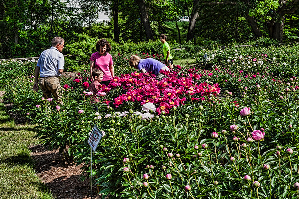 E11. People and Peonies