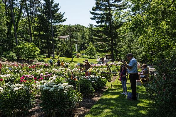 E01. Peony Garden Scenes from Nichols Arboretum