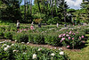 Peony Garden view from NE to SW, featuring Bed 18.