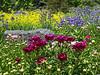 Summer Garden (IN9159)