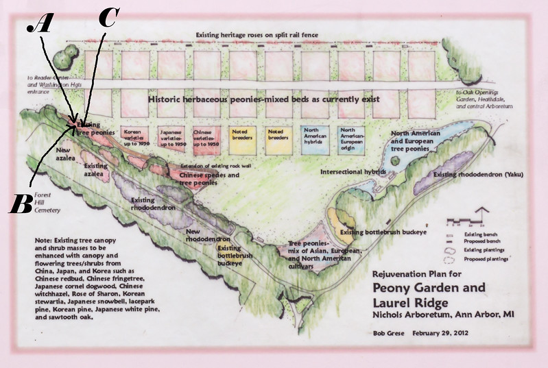 Locations of three tree peony plants (White #1, Magenta #1, Snow Kissed Peach)
