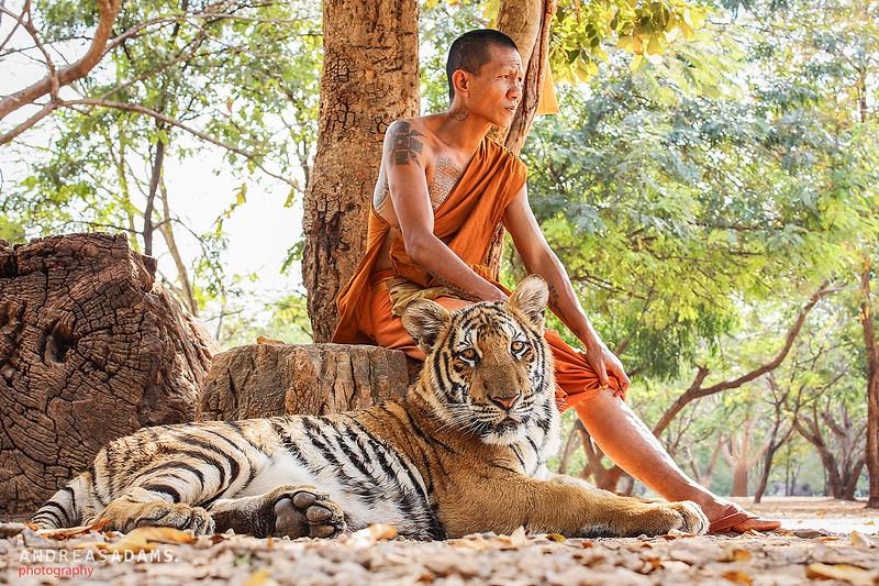 Tiger & Monk