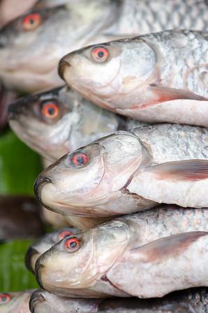 Full fish