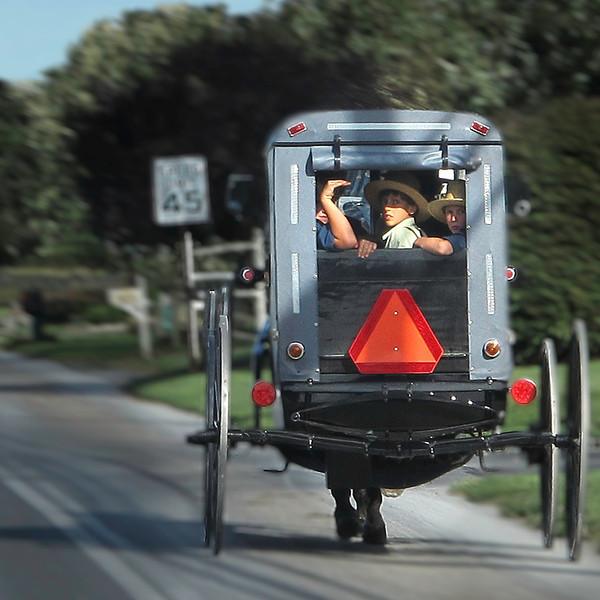 Homeward Bound - Amish