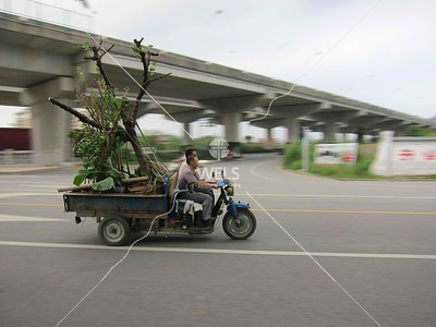 Tree transport in Wenling, China by kstellick