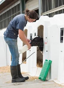 calves_feeding_milk_1983