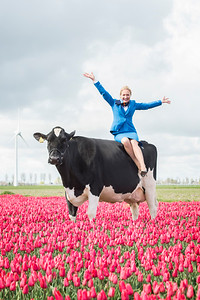 klm-cow-tulips_20170418_0035