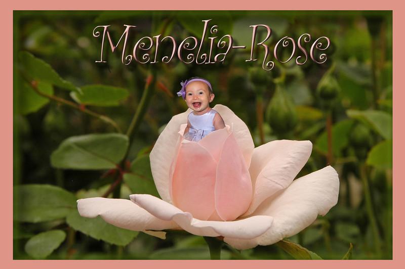 IMG_3658 copy rose