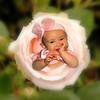 IMG_3919 ROSE 8x8 copy