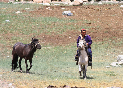 Tuvan Herder from nearby Ger taking his stray horse from our herd in camp
