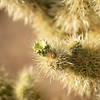 CactusFlowers-0149.jpg