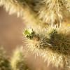 CactusFlowers-0149.jpg