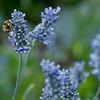 Worker Bee_.JPG