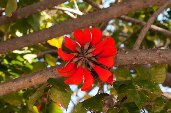 Weird red flower
