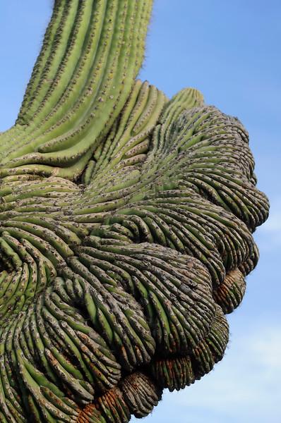 Mutant_Cactus