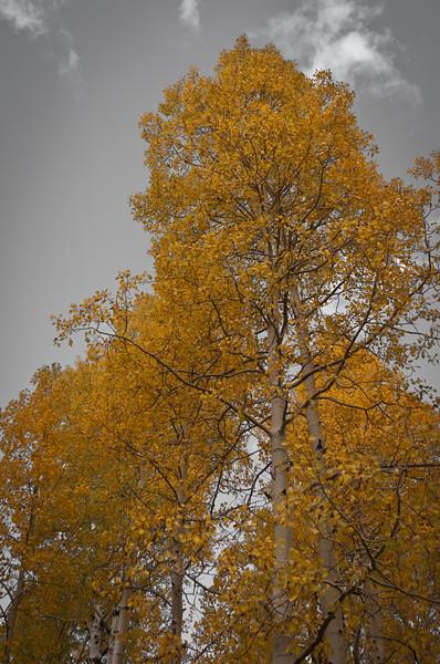 Yellow Tree on my sky