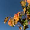 FallColors-8716.jpg