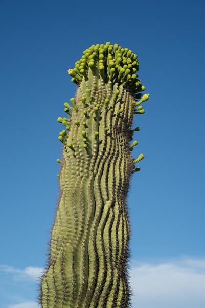CactusFlowers-0137.jpg