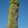 CactusFlowers-0137.jpg