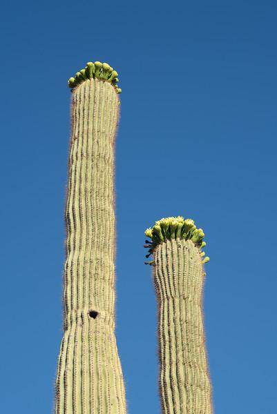 CactusFlowers-0161.jpg