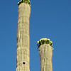 CactusFlowers-0161.jpg