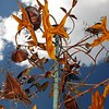 Wind Vane Garden Sculpture