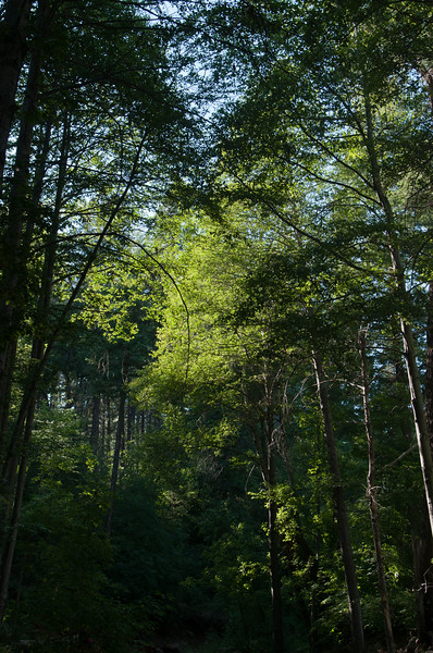 Green Christopher Creek Canopy