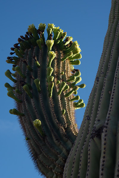 CactusFlowers-0147.jpg