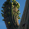 CactusFlowers-0147.jpg