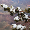 Snow on the branch above the canyon