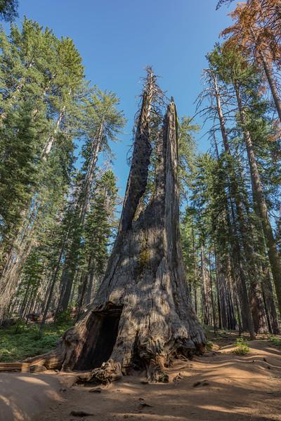 Yosemite2016-5892.jpg