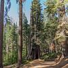 Yosemite2016-5874.jpg