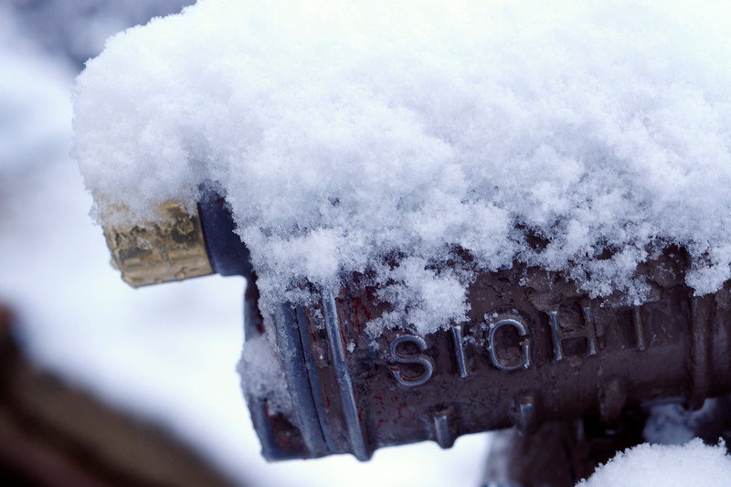 Snowy Sight