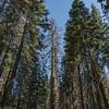 Yosemite2016-5827.jpg