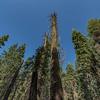 Yosemite2016-5842.jpg