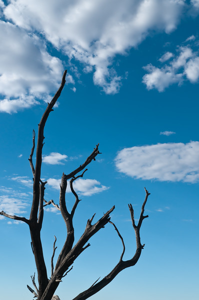 Dead Branches Reach For The Sky