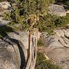 Yosemite2016-5958.jpg